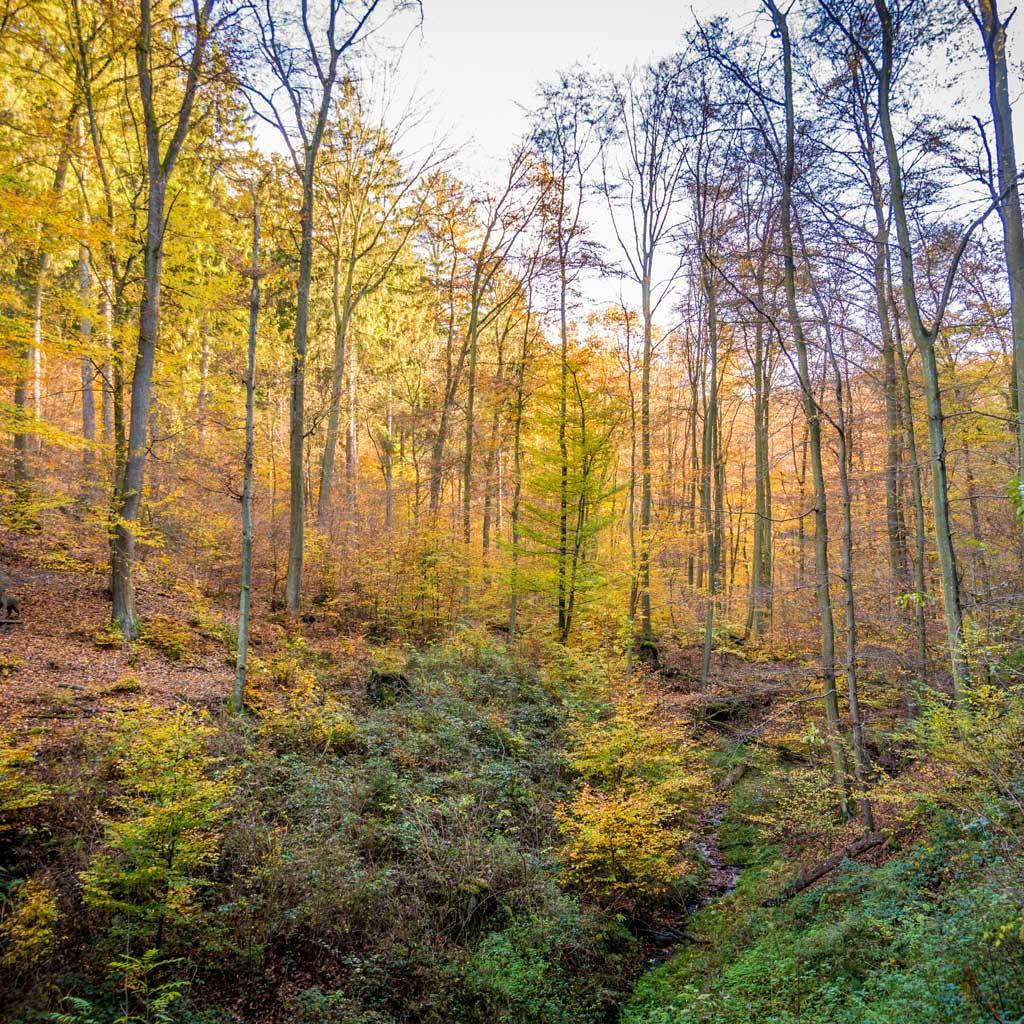 Der Forstmühler Forst
