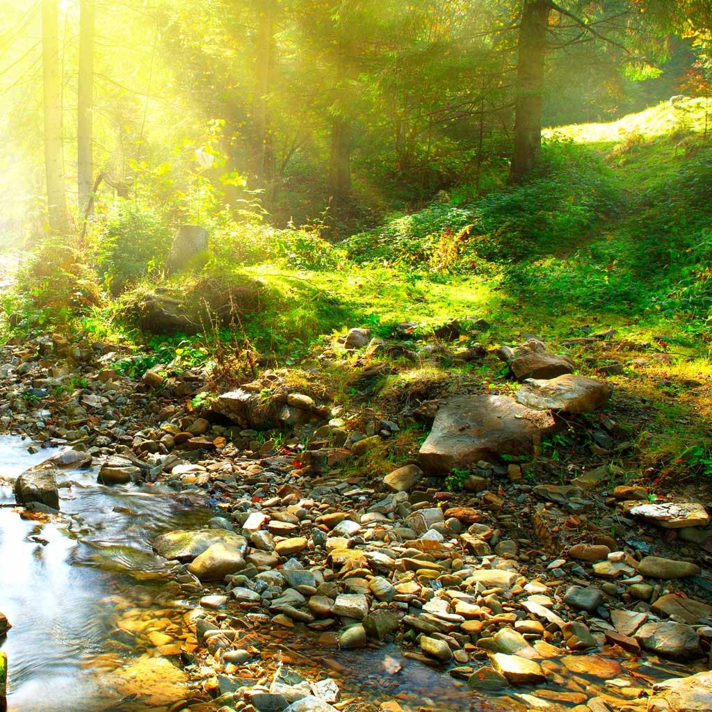Wasser und Vegetation